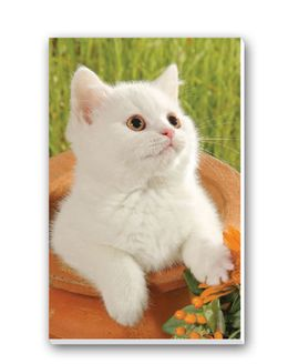 Kittens Bridge Tally Sheets Playing Cards Accessory