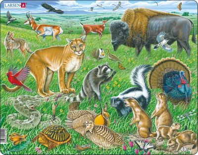 American Prairie Children's Educational 53 Piece Jigsaw Puzzle