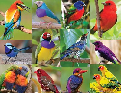Back in Stock! Birds of Paradise 500 Piece Jigsaw Puzzle