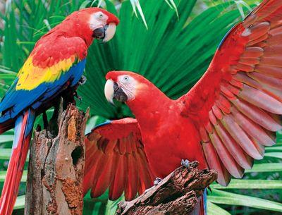 Scarlet Macaw 400 Piece Jigsaw Puzzle
